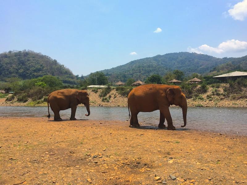 Elefantes tomam banho no rio