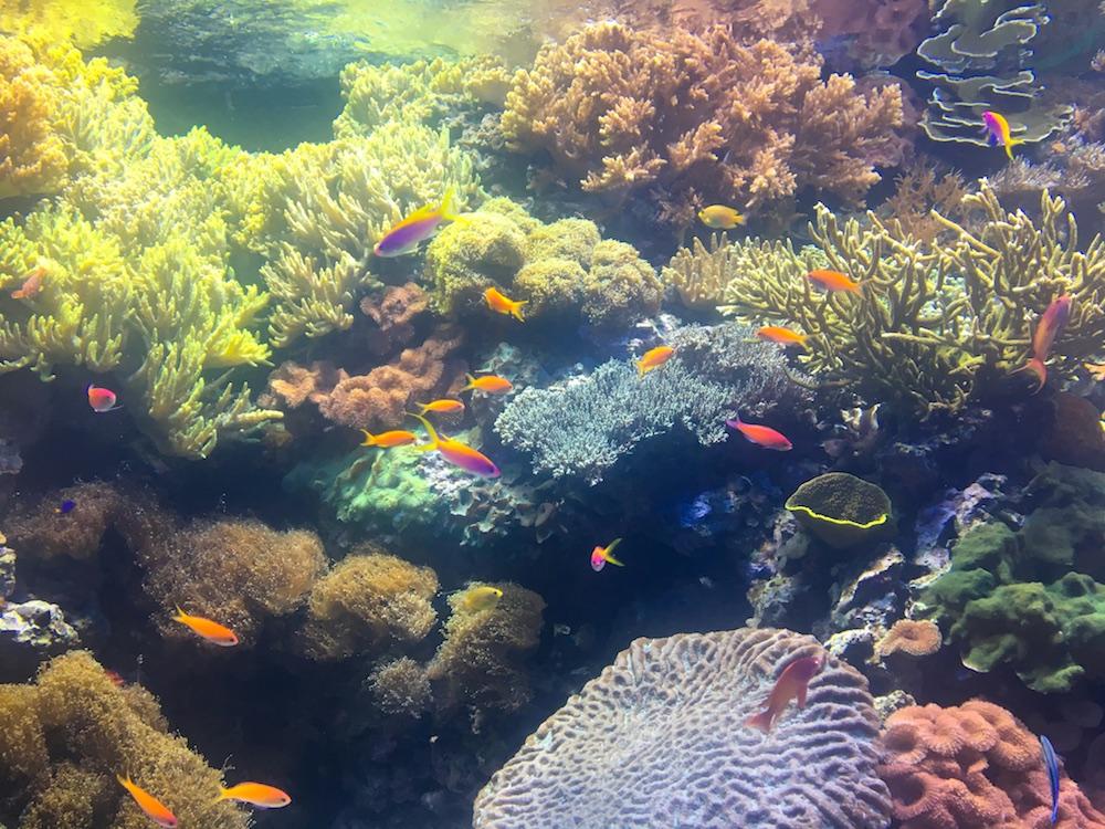Peixes do Oceanário de Lisboa