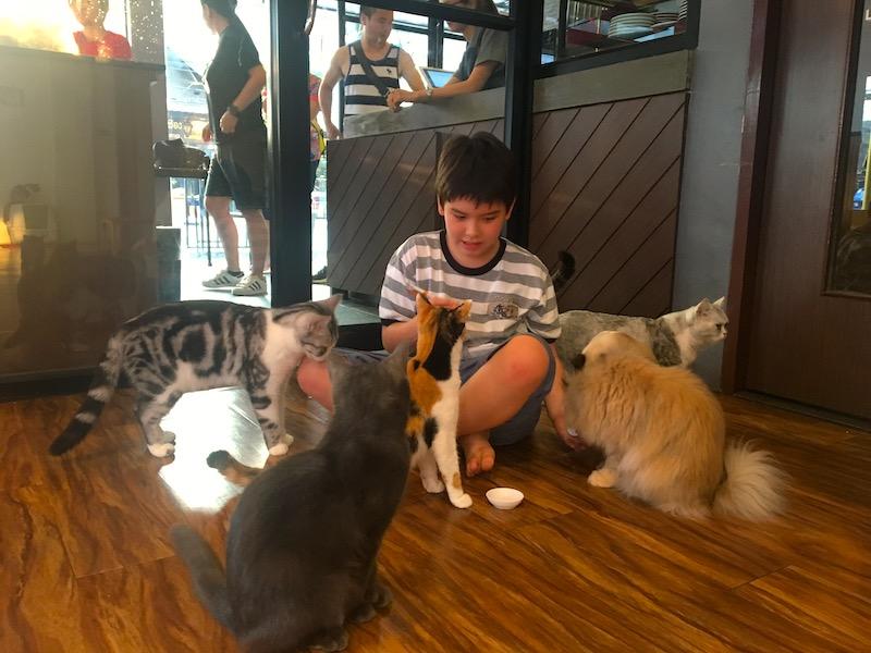 Criança e gatos
