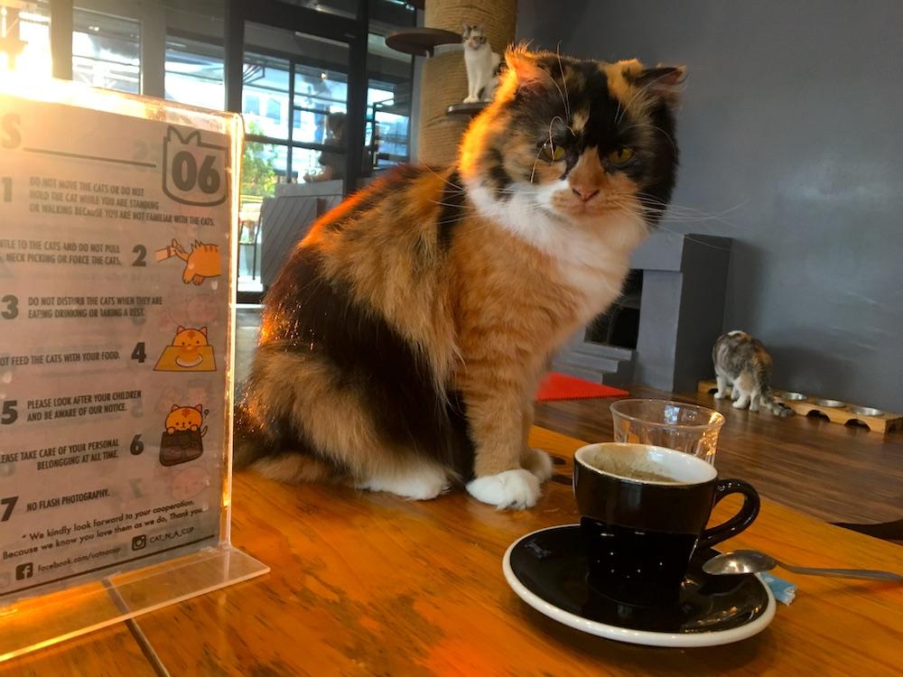 Café com gatos