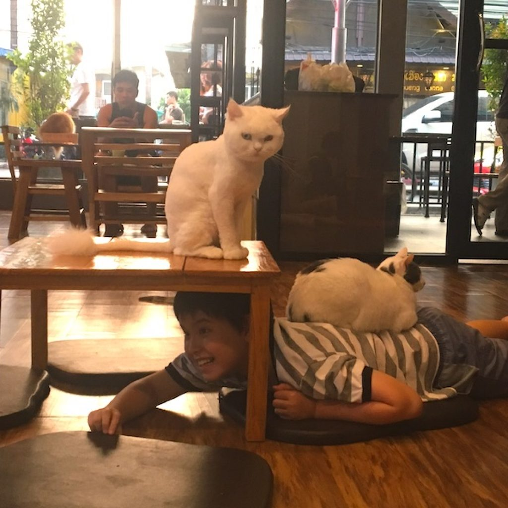 Criança e gato