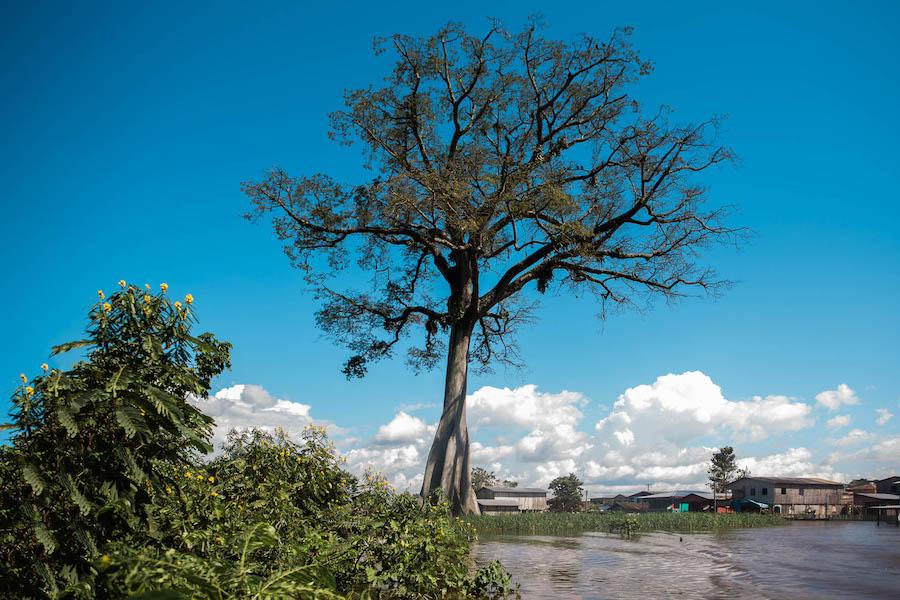 Paisagem da floresta amazônica